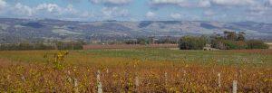 McLaren Vale wineries on the Fleurieu App